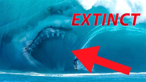 Why The Megalodon Went EXTINCT! (YOU WONT BELIEVE WHY
