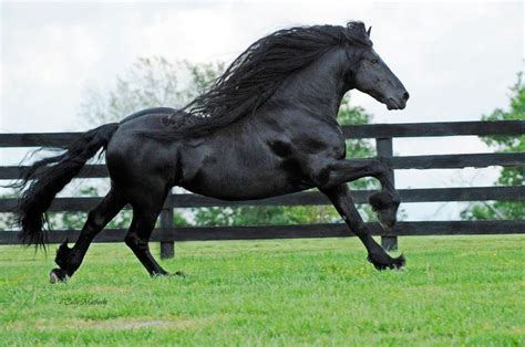Frederik the Great is the 'world's most handsome horse