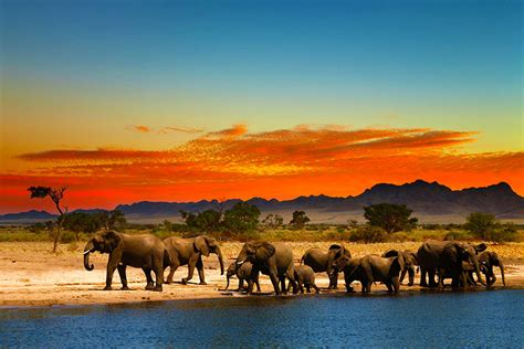 All Inclusive Vacations in Africa - What's Included on Safari?