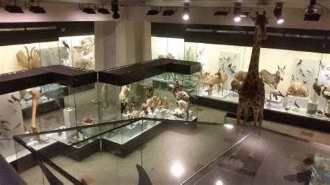 Zoological Museum (Zurich) - 2019 All You Need to Know