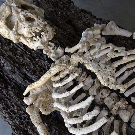 Human Skeletons Assembled with Found Coral by Gregory