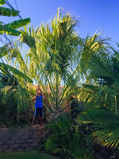 Best Landscaping Palm for Zone 9? - DISCUSSING PALM TREES