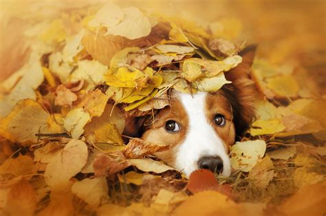 Pet Care in the Fall